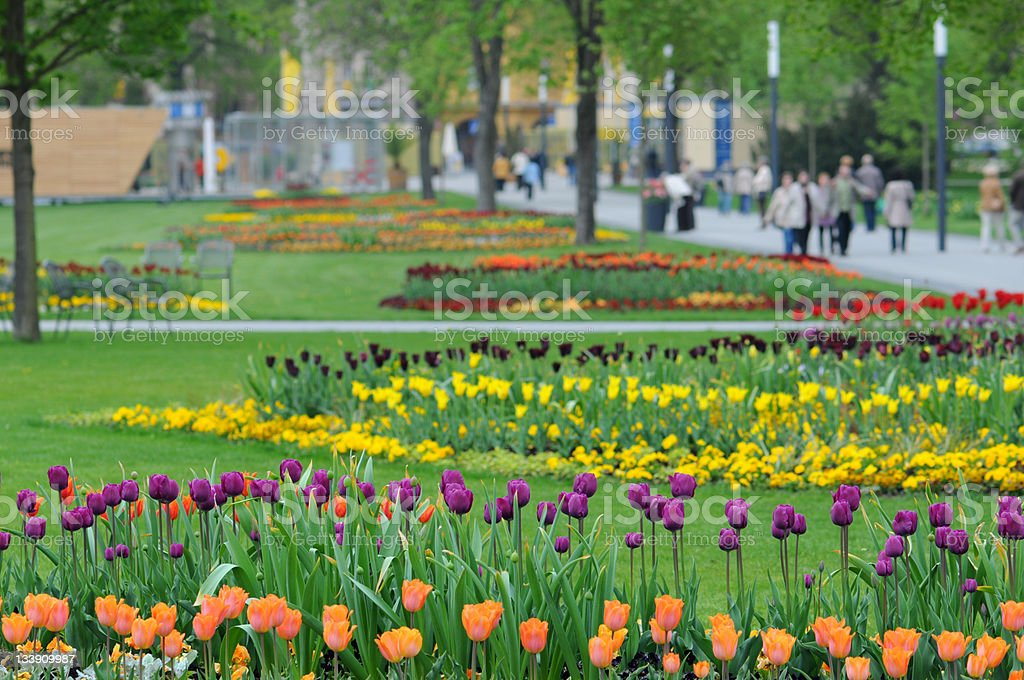 flower bed of tulips with people in background stock photo