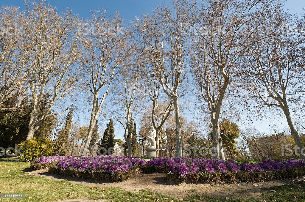 Flower bed stock photo