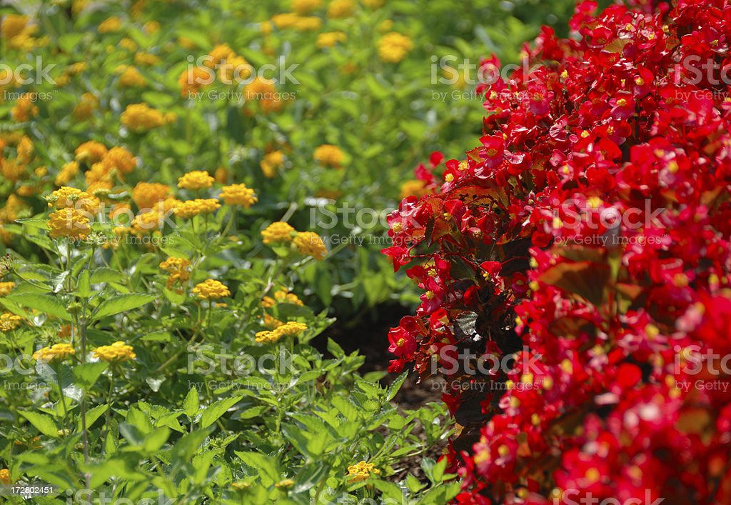 Flower Bed Wars stock photo