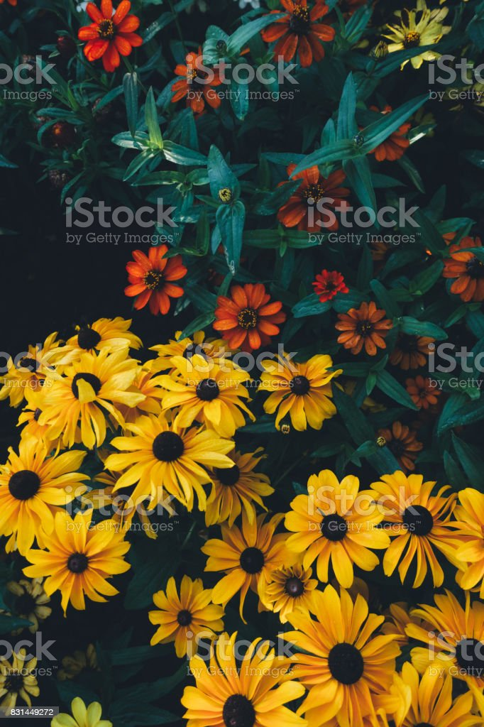 Flower Bed With Colorful Flowers stock photo