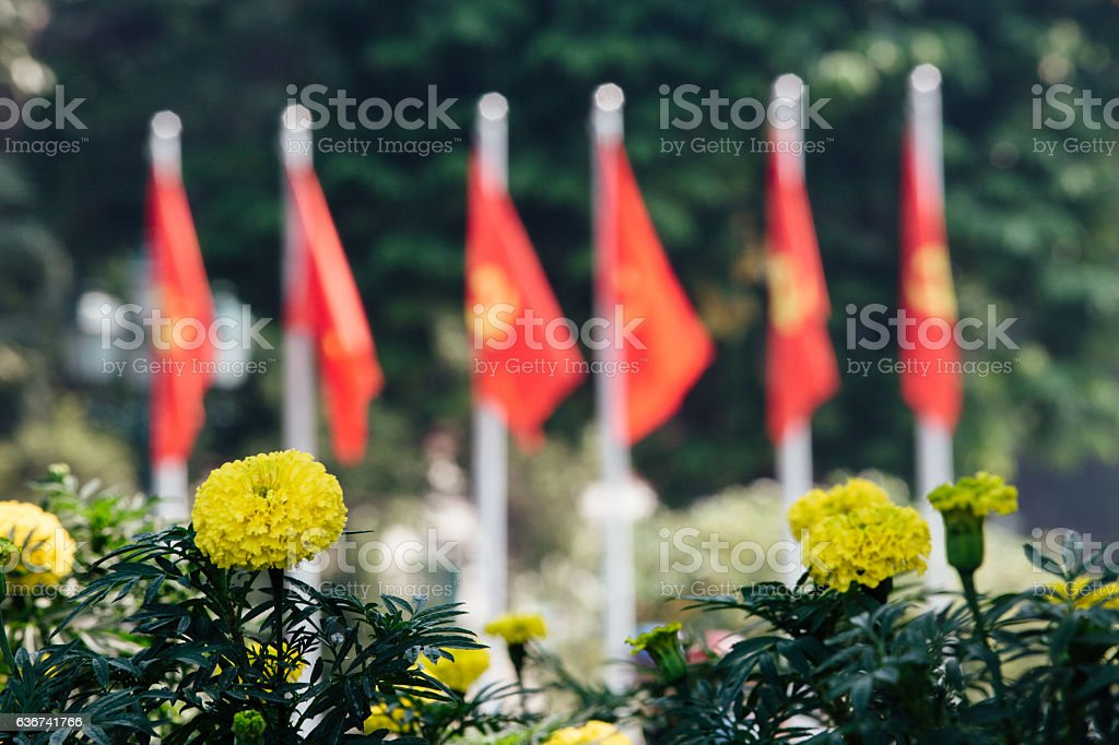 flower bed with yellow flowers in the background the city stock photo