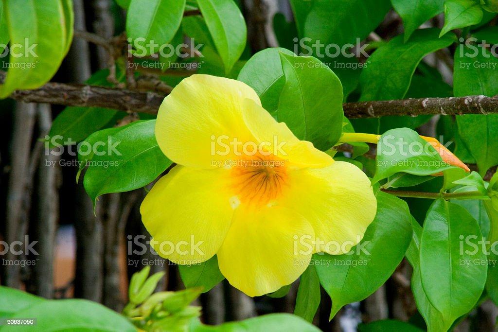 Blume bell Lizenzfreies stock-foto