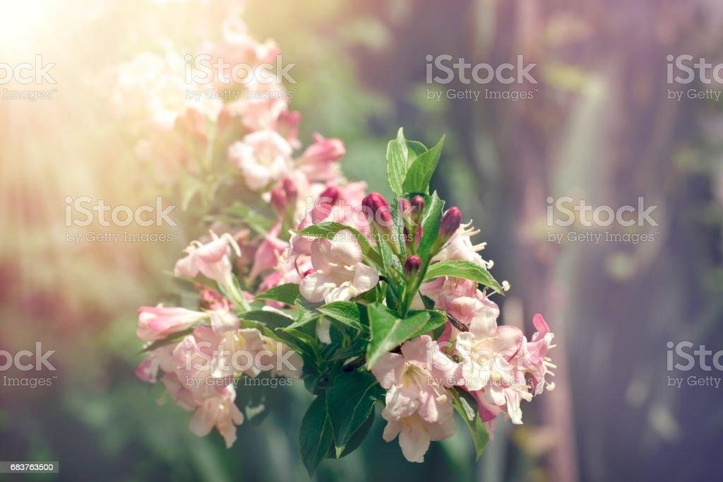 Flower bells in meadow lit by sunlight stock photo