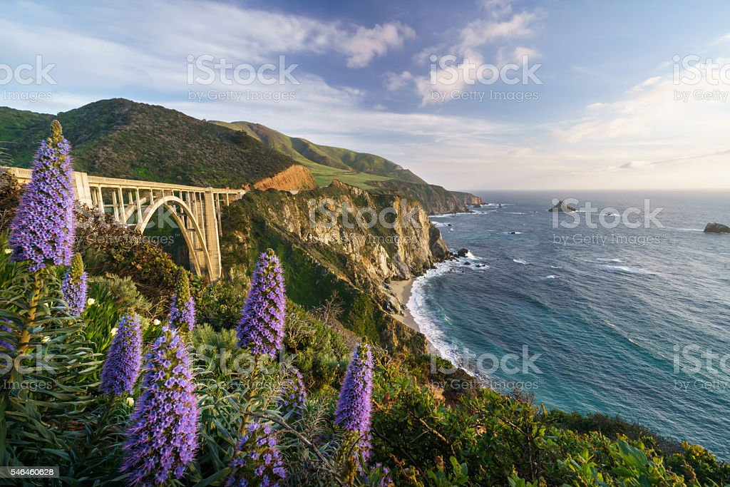 Flower bloom at Bixby Bridge, California stock photo
