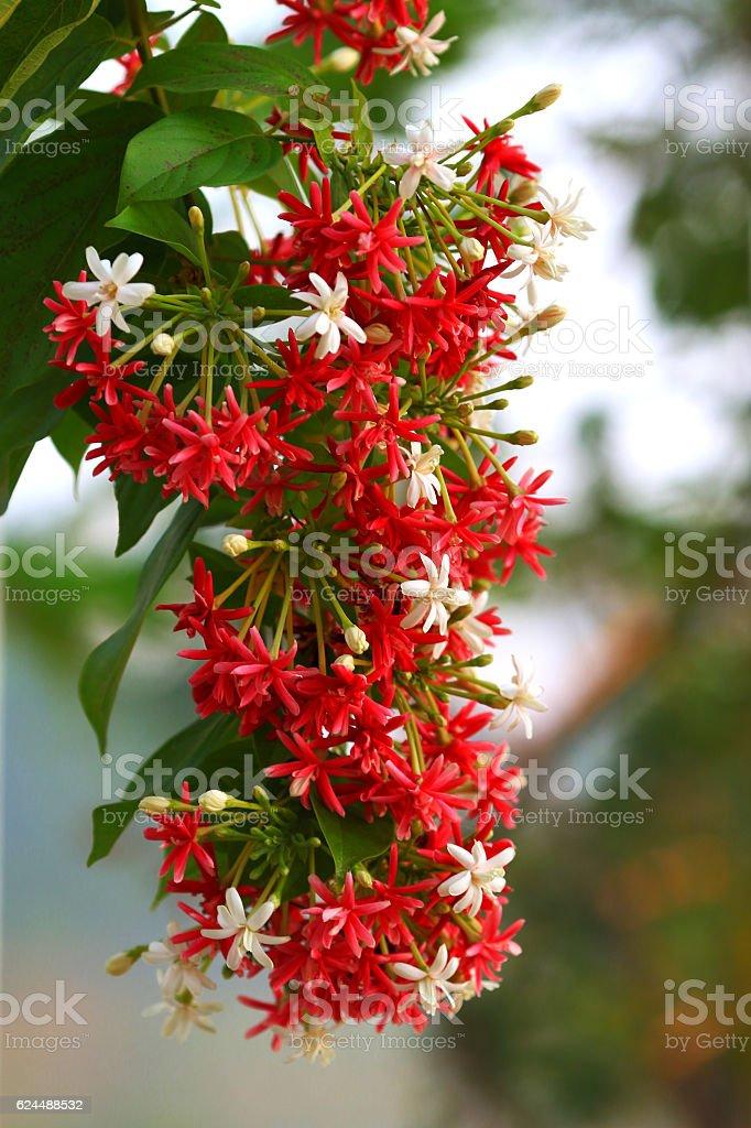 Flower bloom stock photo