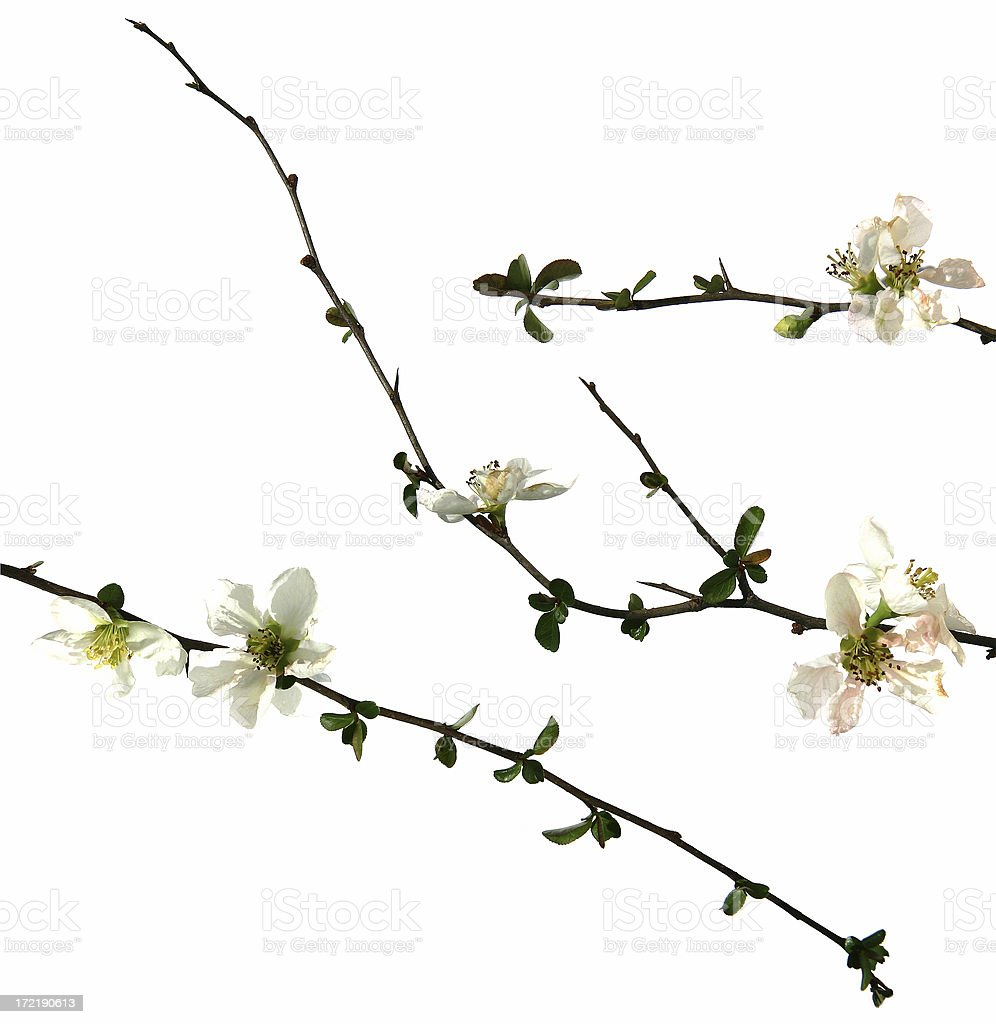 Flower Bloom Vines royalty-free stock photo