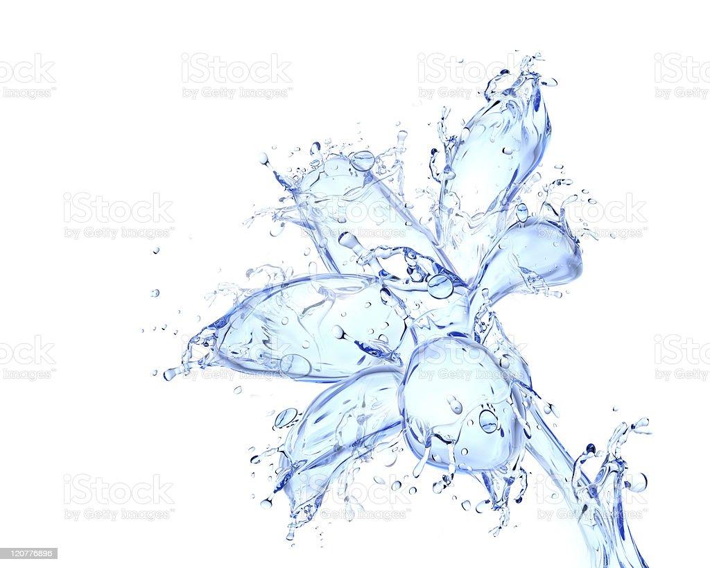 Flower blossom liquid artwork stock photo