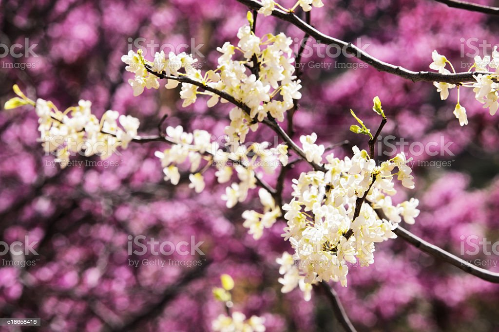 Flower Blossom Petals Fruit Tree Bloom stock photo