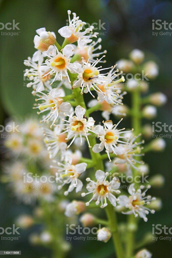 flower blossom royalty-free stock photo