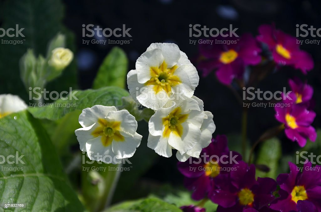 flower, blossom stock photo