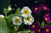 flower, blossom