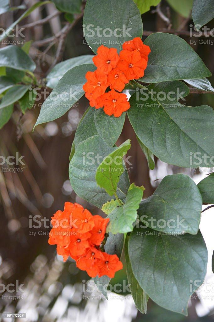 Flower Bolossom stock photo