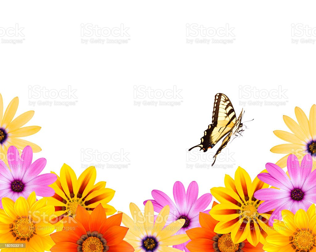 Flower Border and A Butterfly stock photo