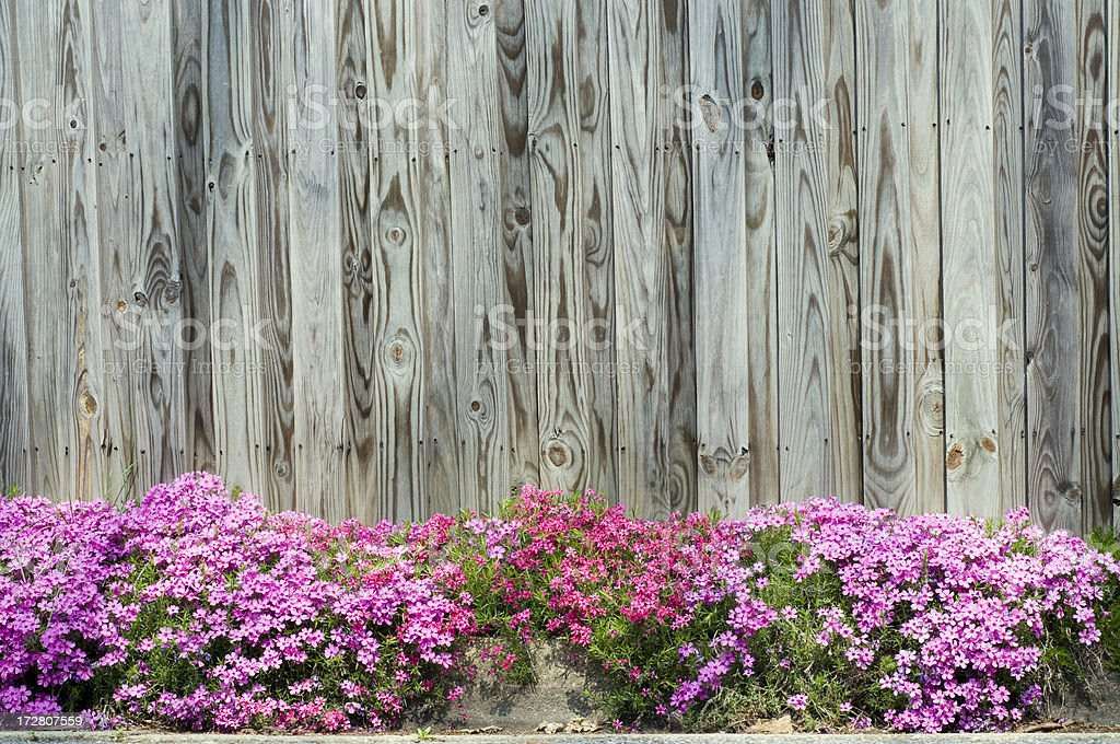 Flower Border and Wooden Fence stock photo