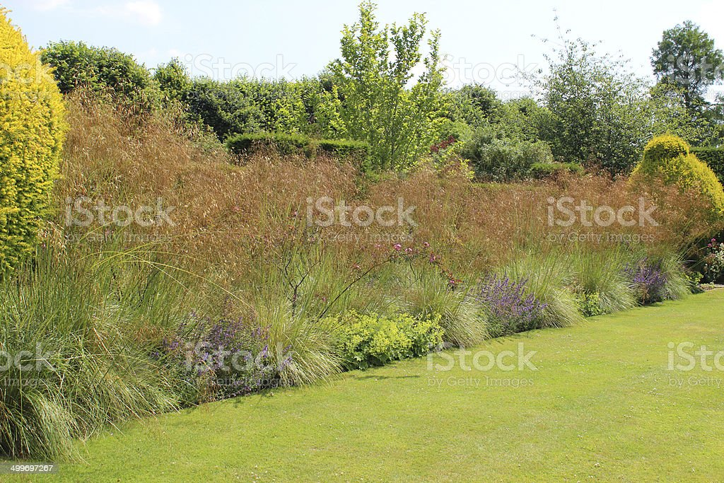 Flower border in garden / seed heads, ornamental grasses in seed stock photo