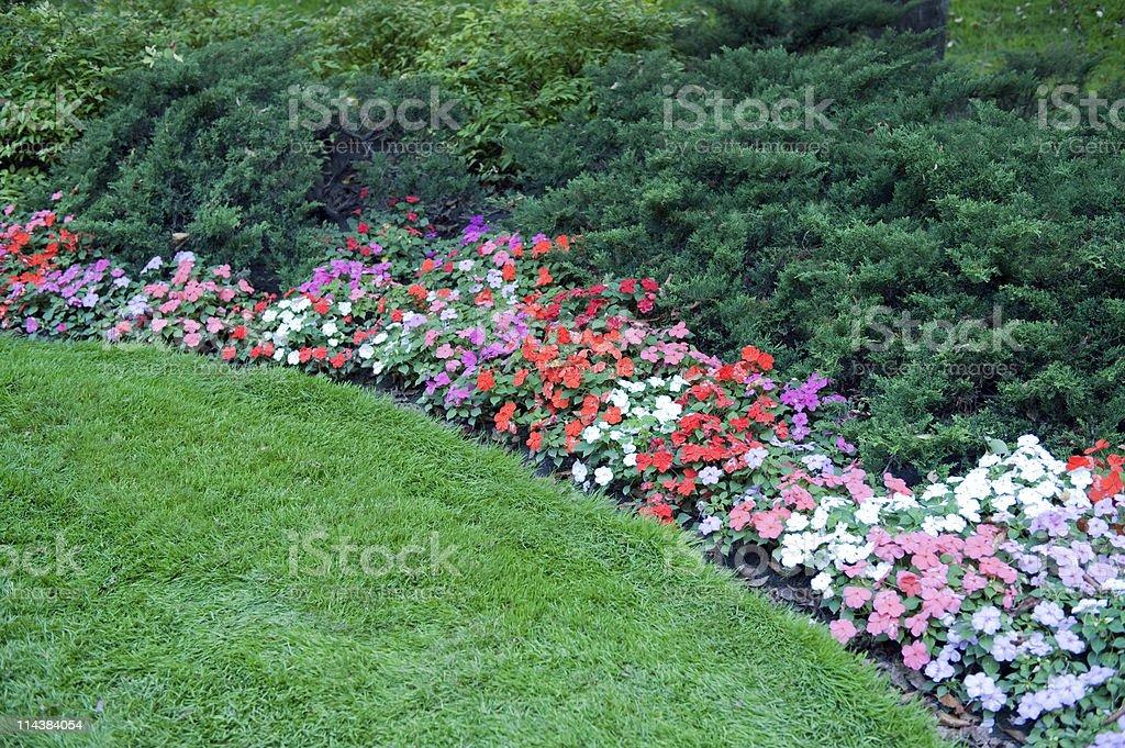 Flower Border stock photo