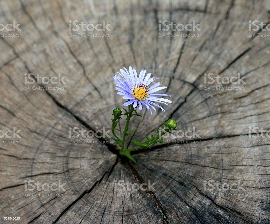 flower born on the stump stock photo