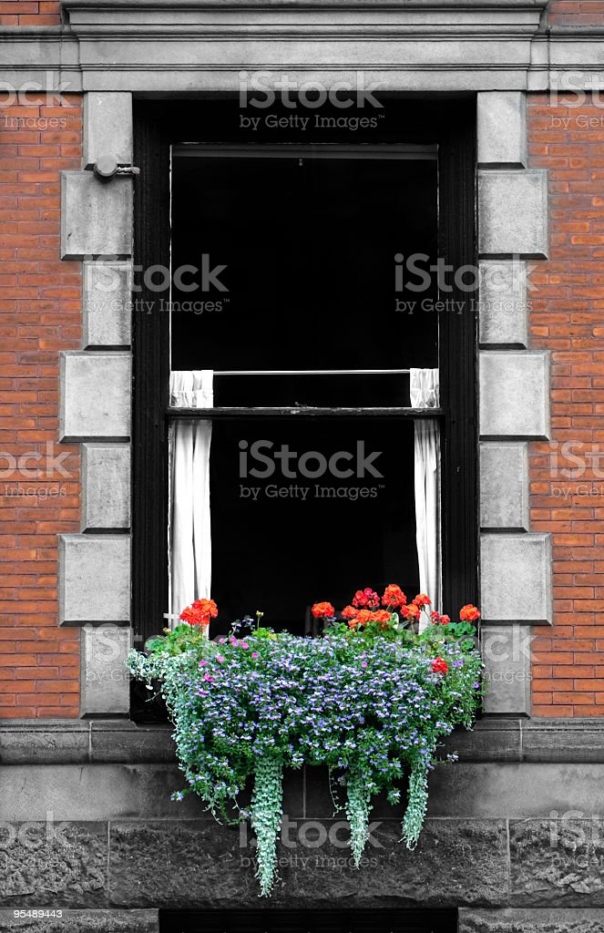 Flower Box royalty-free stock photo