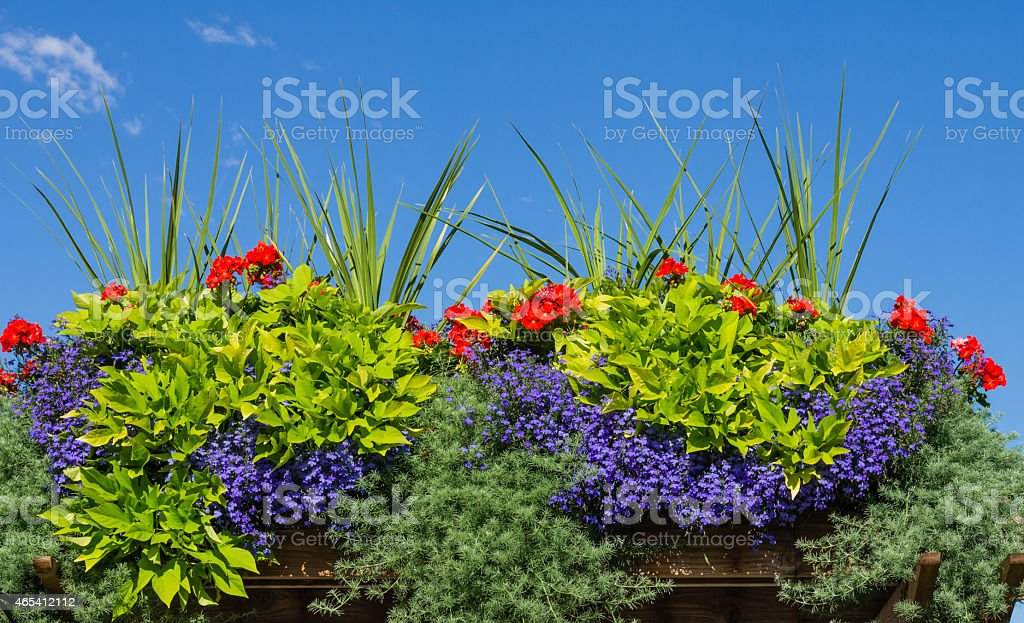 Flower box with blooming plants stock photo