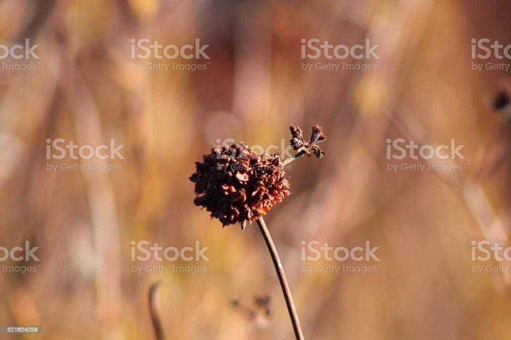 Flower Bud and Vegetation stock photo