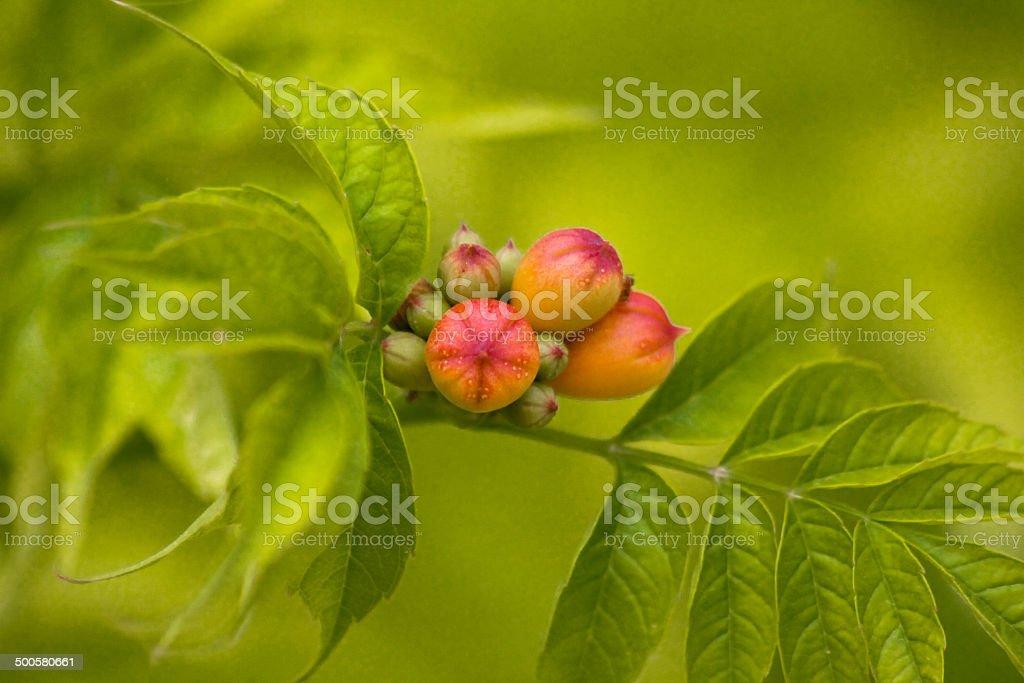 Flower buds stock photo