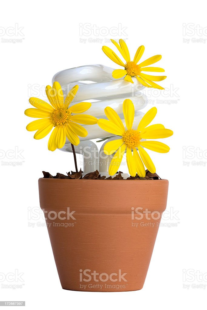 Flower Bulb royalty-free stock photo
