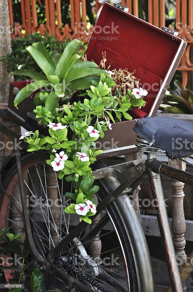 flower bunch growing on bicycle royalty-free stock photo
