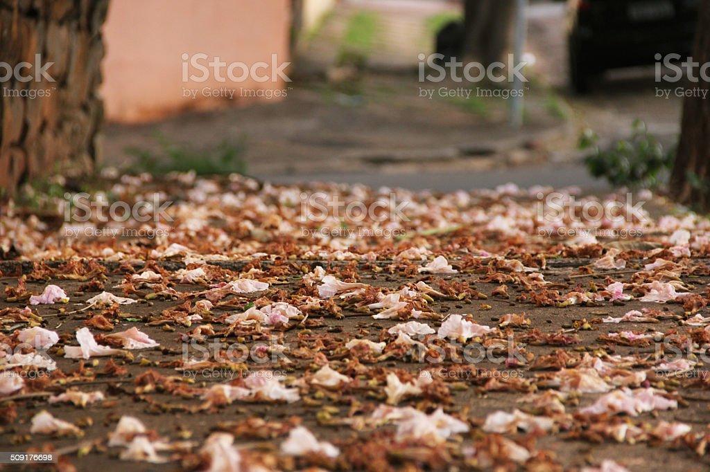 Flower carpet on sidewalk stock photo