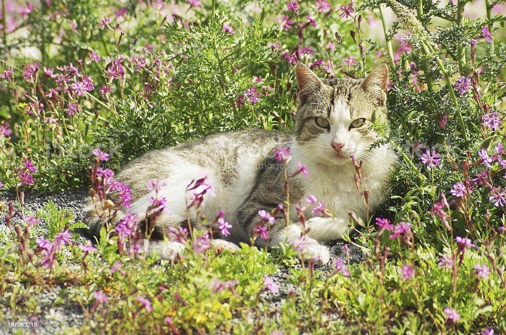flower cat stock photo