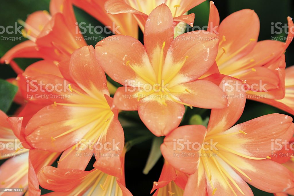 Flower close up 14 royalty-free stock photo