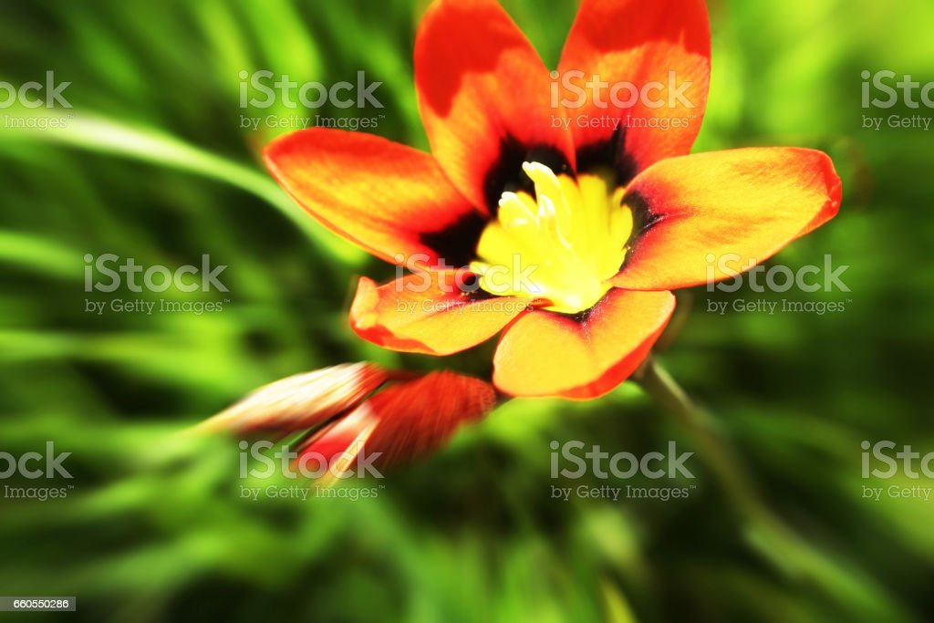 Flower Close Up High Quality stock photo