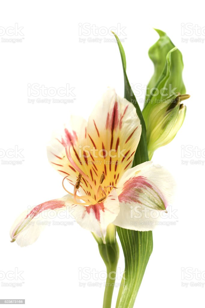 Flower Close up stock photo
