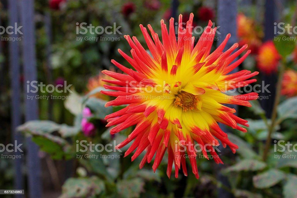 flower closeup particular flower rare plant stock photo