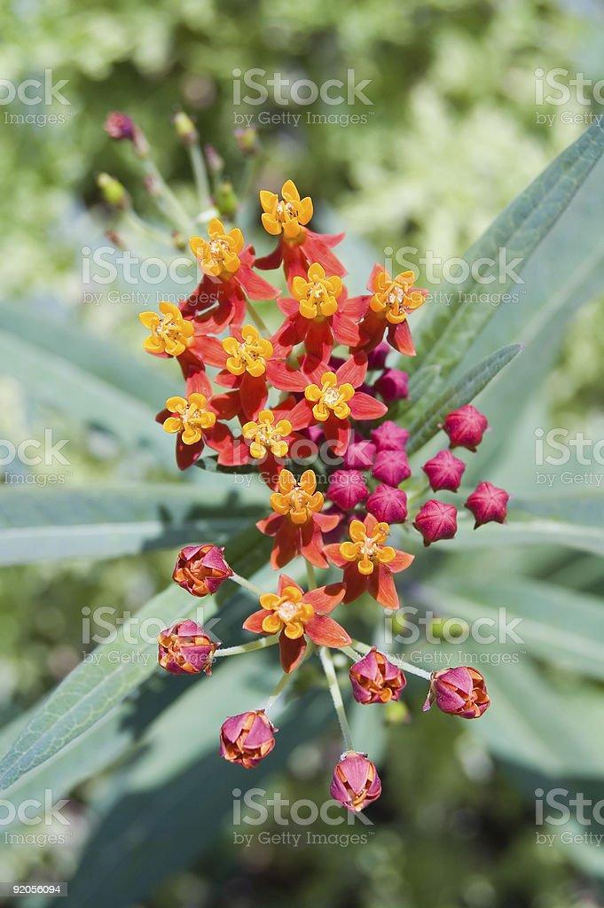 Flower cluster stock photo