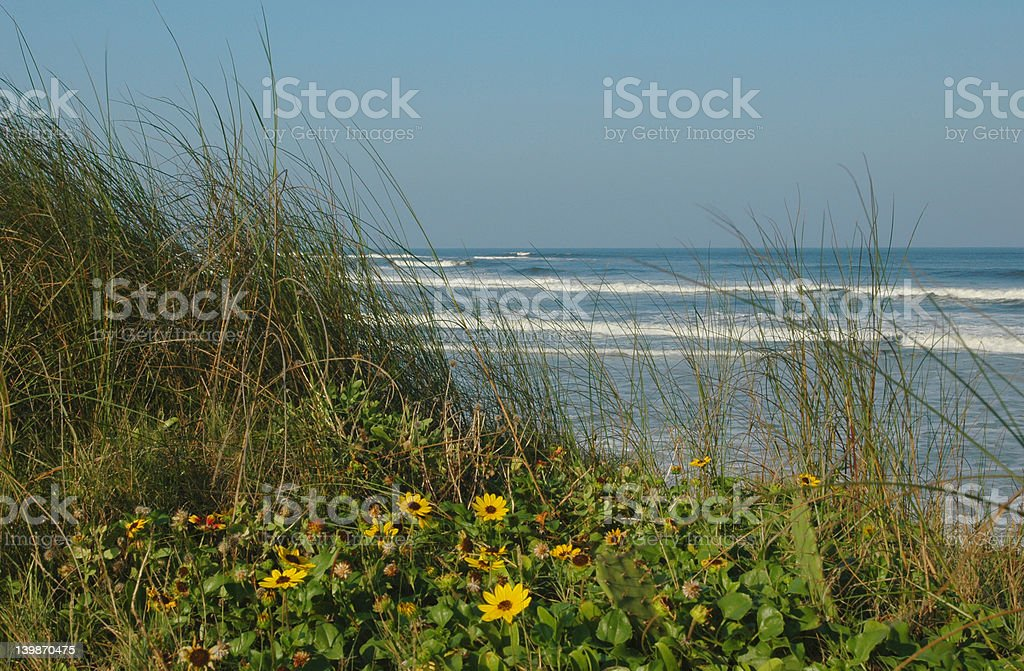 Flower Coast royalty-free stock photo