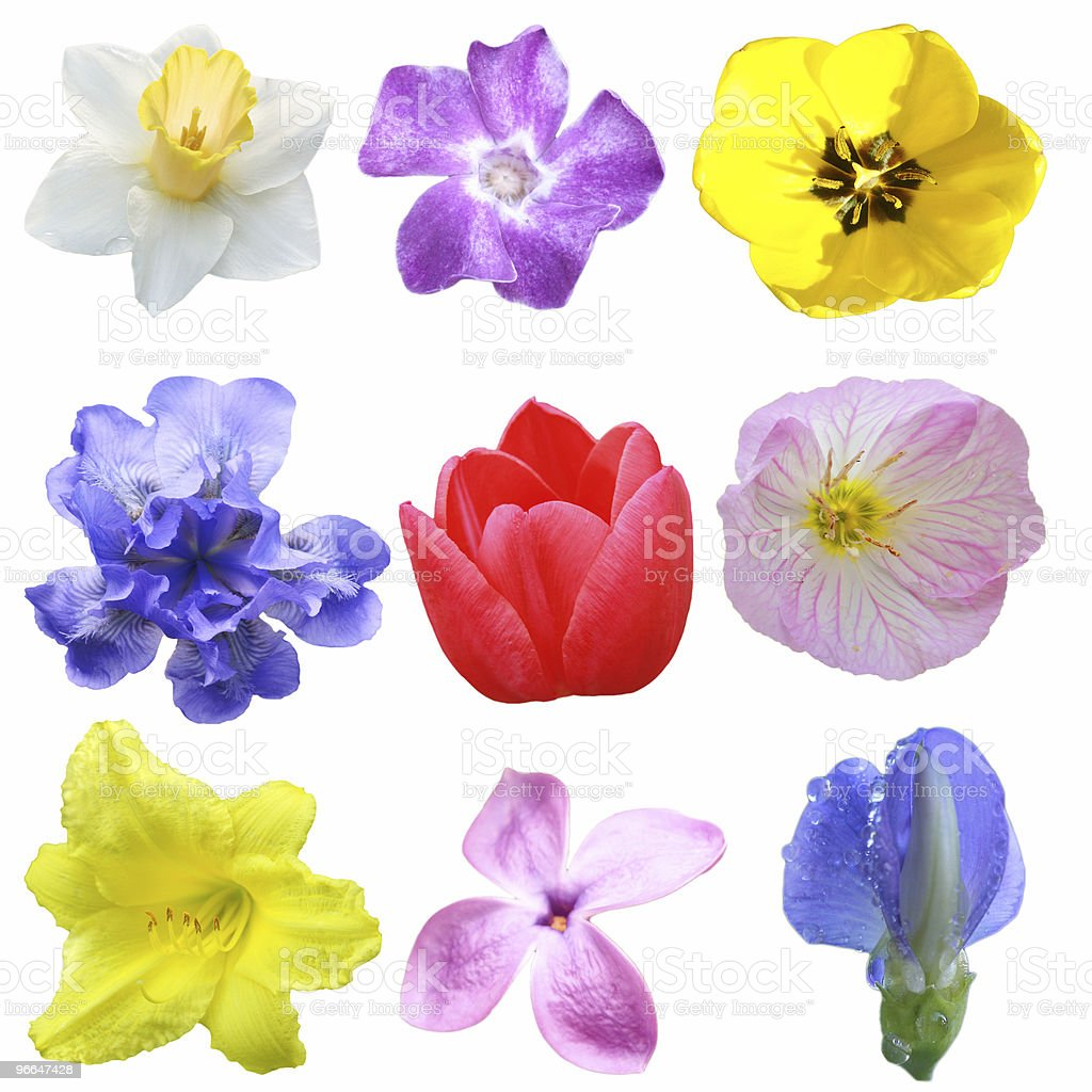 Flower Collection royalty-free stock photo
