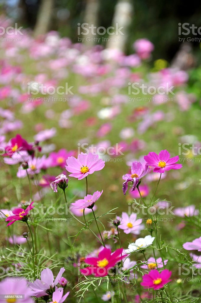 Flower colors stock photo
