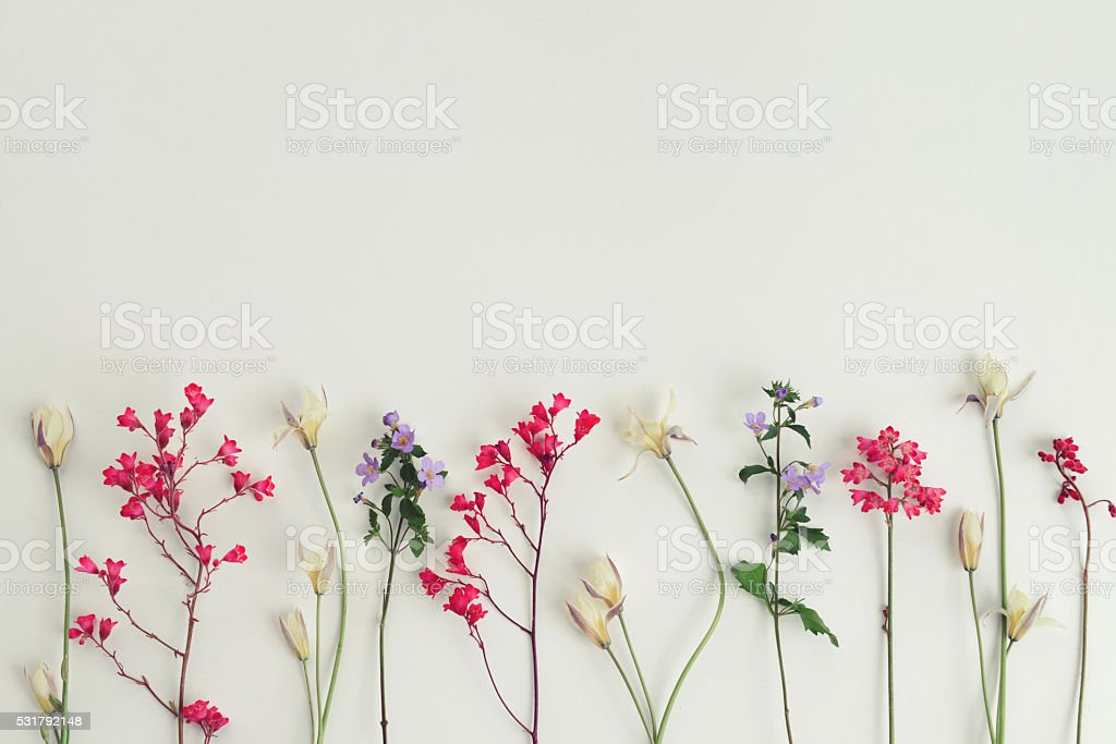 flower, composition flat lay stock photo
