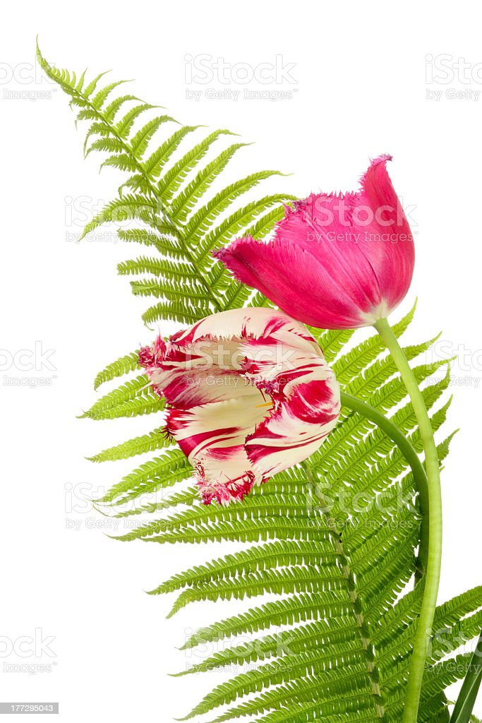 Flower composition royalty-free stock photo