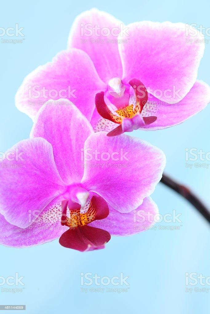 Flower detail royalty-free stock photo