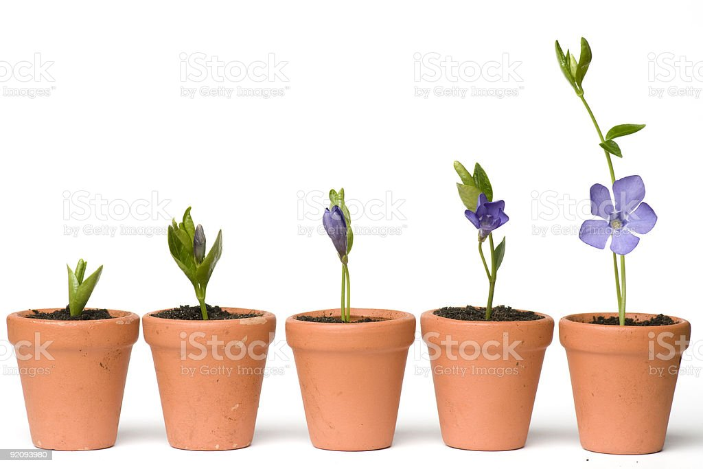 Flower development royalty-free stock photo