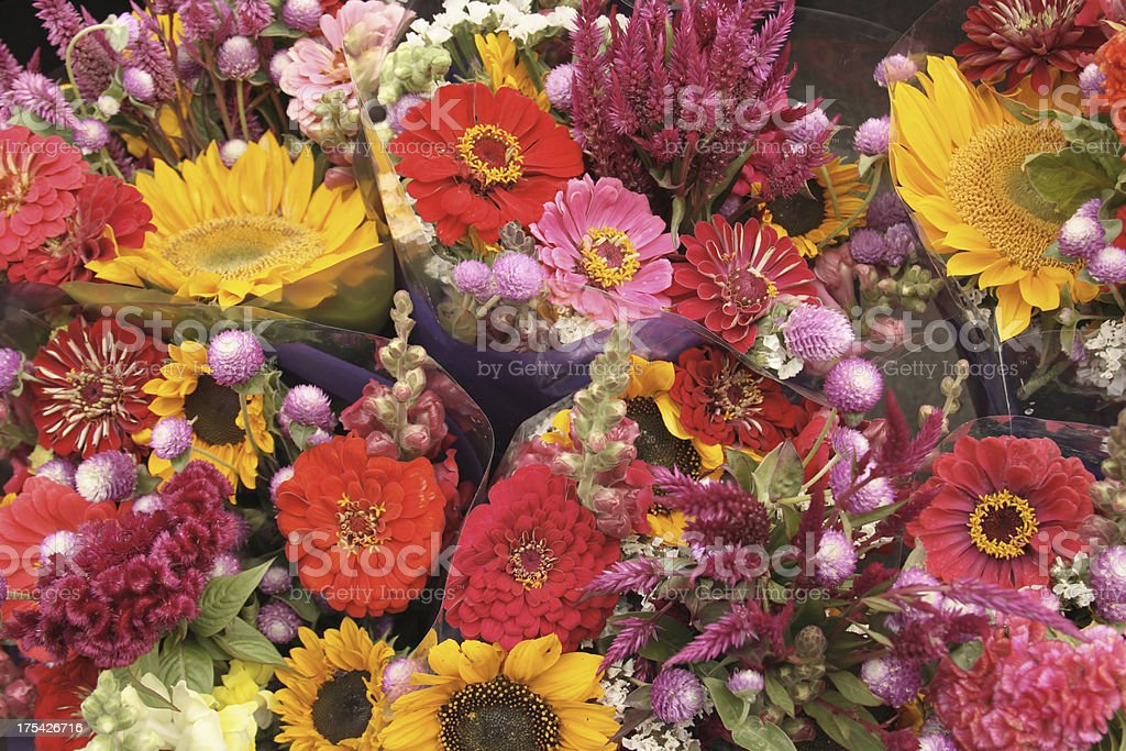Flower Display royalty-free stock photo