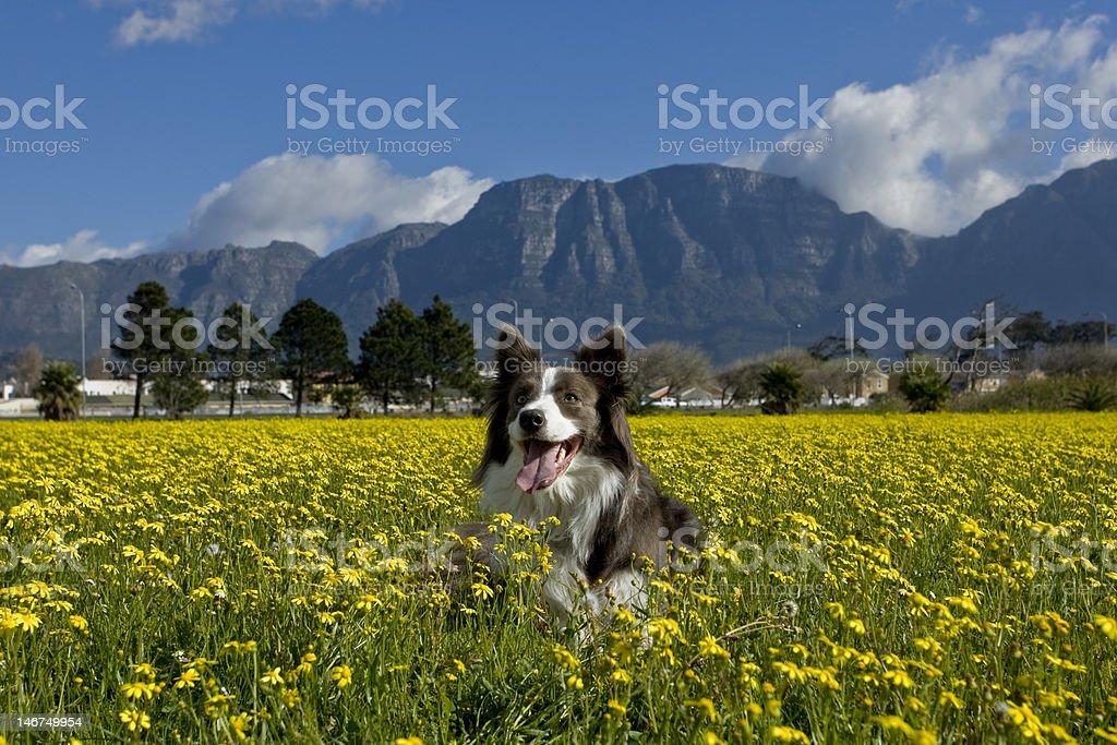Flower Dog stock photo