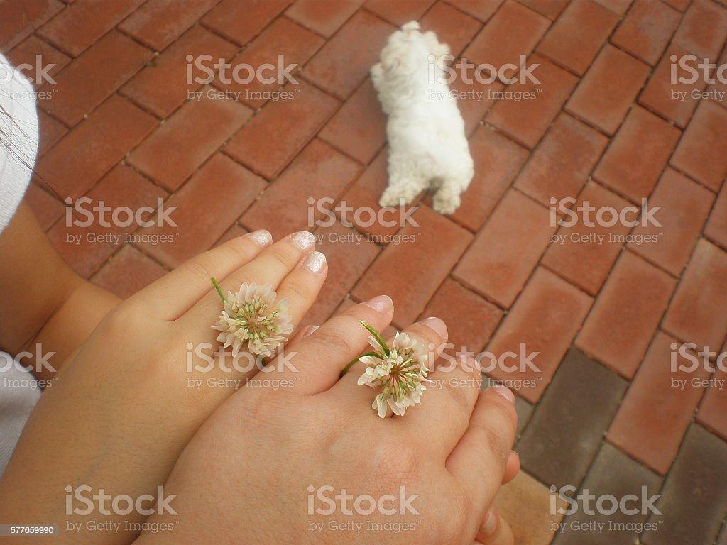 꽃반지 stock photo