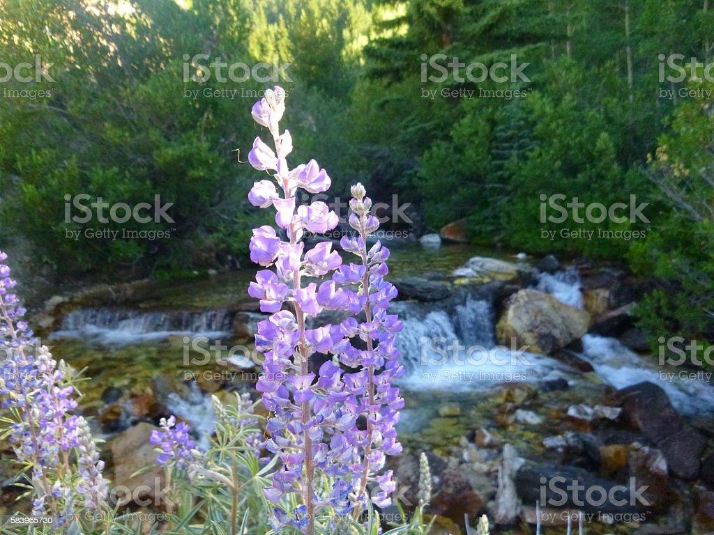 Flower Falls on the Hyndman Trail stock photo
