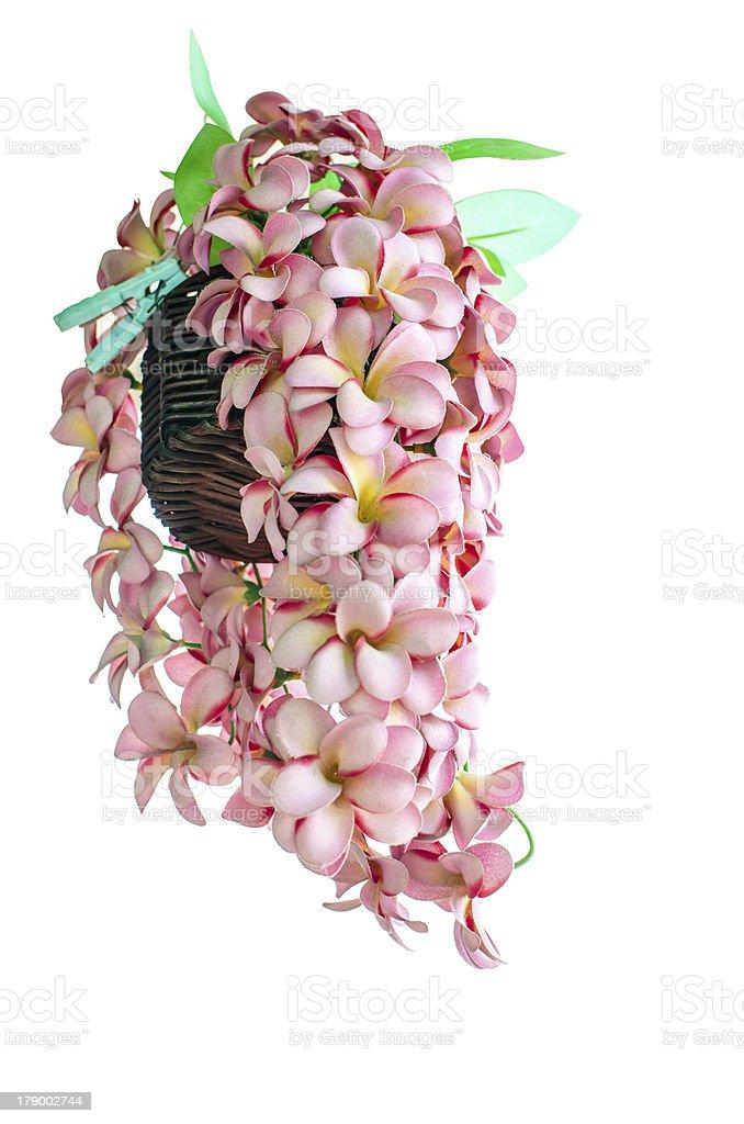 Flower false on isolated royalty-free stock photo