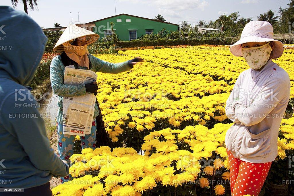 Flower Farm in Mekong Delta stock photo