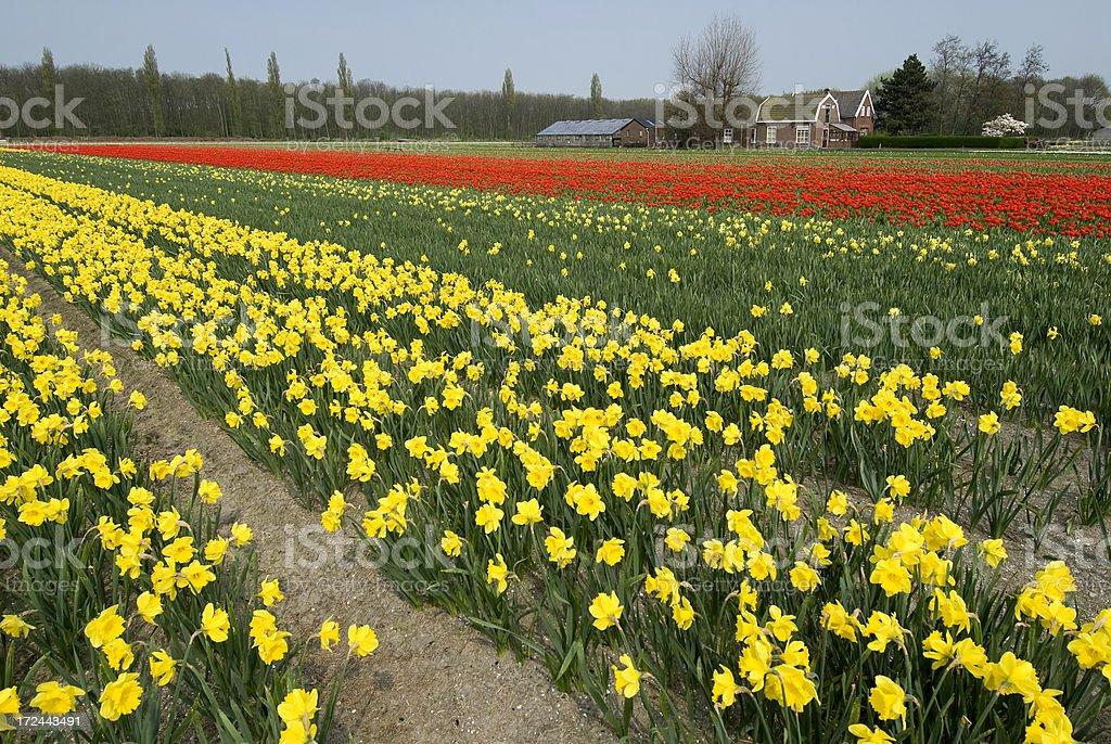 Flower Farm royalty-free stock photo