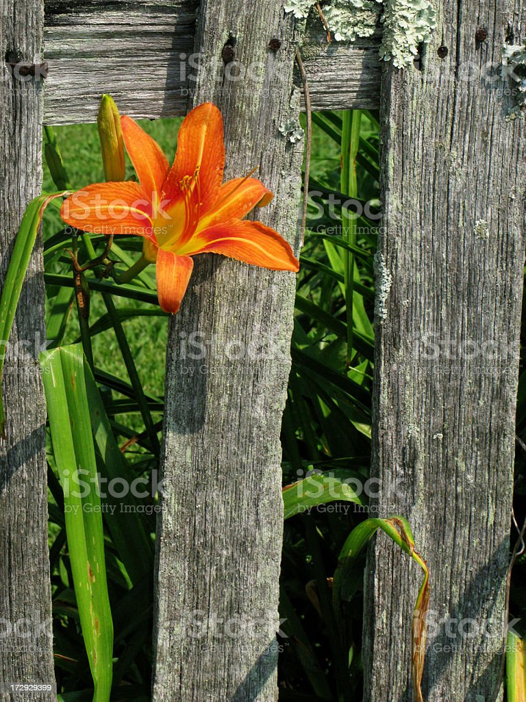 Flower & Fence stock photo