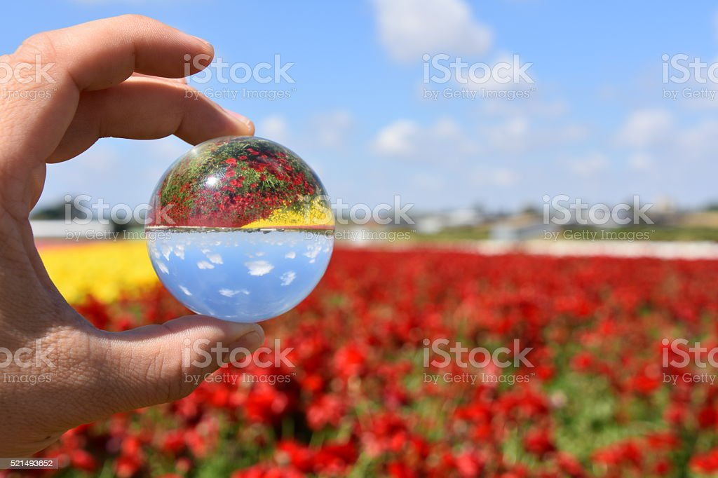 Flower Field and Crystal Ball stock photo